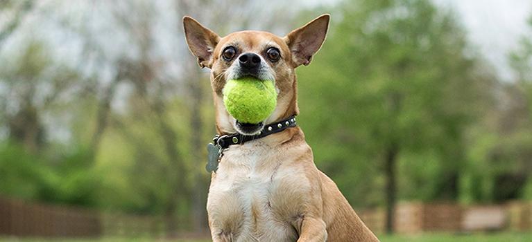 Quelles activités ludiques faire avec son chien?