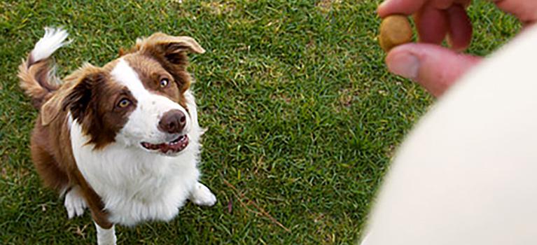 Un chien adopté peut-il encore apprendre?