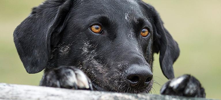 Vous pensez adopter un chien ? Pensez au refuge.