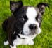 Nauka komend dla psa – siad, leżenie, przychodzenie do nogi