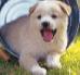 Agility dla psa i tor przeszkód – trening zręcznościowy