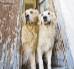 Jak szkolić psa, aby znał podstawowe komendy?