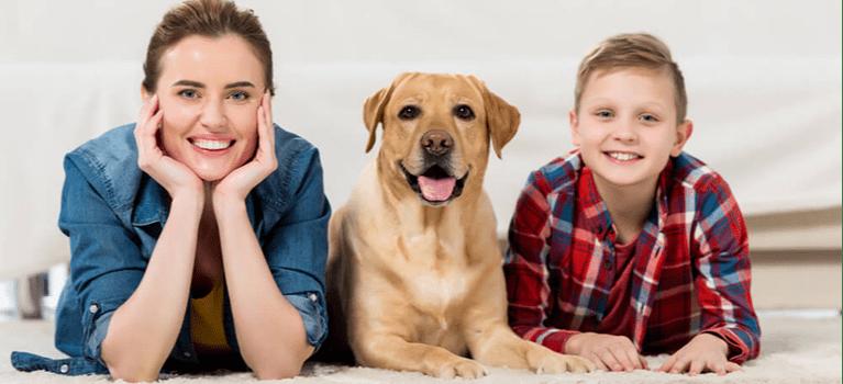 5 elementów wychowania, o których powinien pamiętać każdy opiekun psa