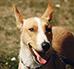 Adopcja psa ze schroniska - jak wygląda, czy kosztuje?