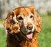 Adopcja starszego psa – jak się nim zaopiekować?