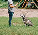 Behawiorysta psi - kim jest i czym się zajmuje?