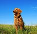 Białko w diecie psa – jakie jest na nie zapotrzebowanie?