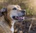 Czyszczenie zębów u psa – dlaczego jest takie ważne?