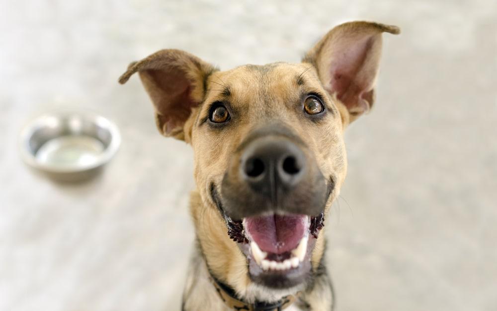 Czy psy mogą jeść chleb? Czy karmienie psa chlebem nie zaszkodzi? Czy suchy chleb dla psa jest zdrowy? Poszukaj odpowiedzi wspólnie z Pedigree!