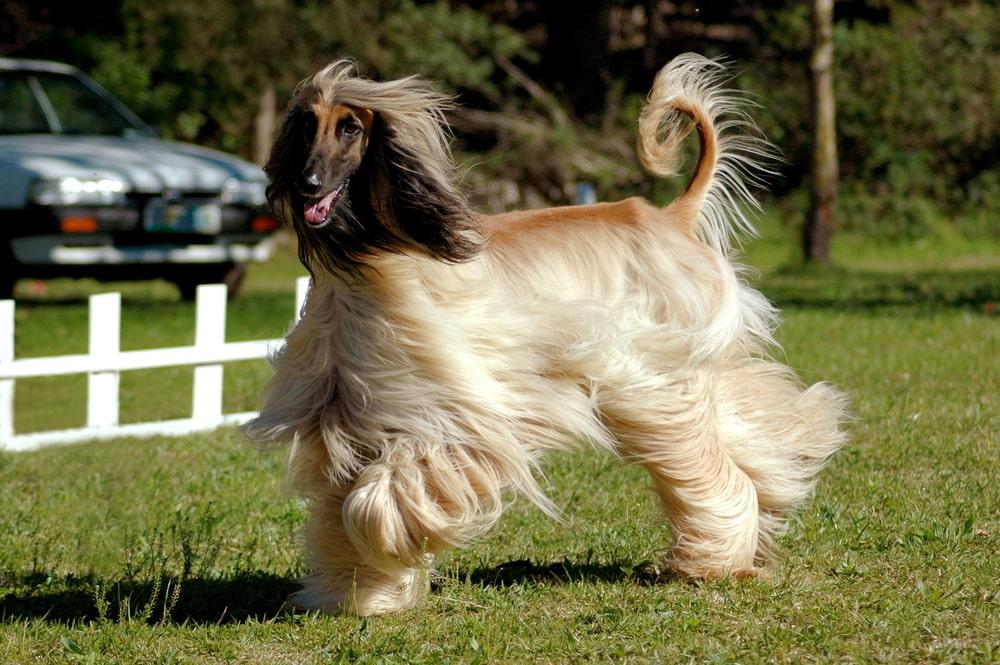 Odchudzanie psa to poważne przedsięwzięcie. Sprawdź, jak odchudzić psa po sterylizacji i nie tylko. Szukaj sprawdzonych porad na pedigree.pl