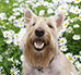 Hotel dla psów – jak wygląda w nim opieka nad naszym pupilem?