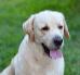 Jak nauczyć psa właściwych zachowań?