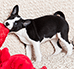 Jak oduczyć psa gryzienia? Sprawdzone porady