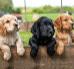 Jak dbać o zęby psa, czyli higiena jamy ustnej u psów