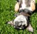 Zabawy z psem – najlepsze pomysły na spędzanie czasu z pupilem