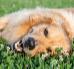 Dzień Przyjaciela - uczcij go ze swoim psim towarzyszem!