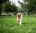 Przetrwałe zęby mleczne u psa - co należy zrobić?