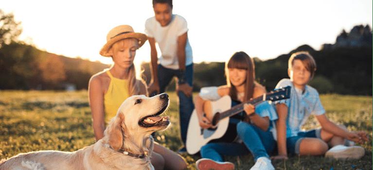 Socjalizacja psa: zdobywanie świata sprawdzonymi metodami