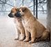 Bezdomne psy – w jaki sposób im pomóc?