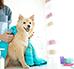 Pielęgnacja psa - w jaki sposób dbać o psa?