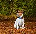 Porzucony pies – jak mu pomóc, co zrobić?