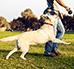 Szkolenie psów – najważniejsze wskazówki dla opiekunów