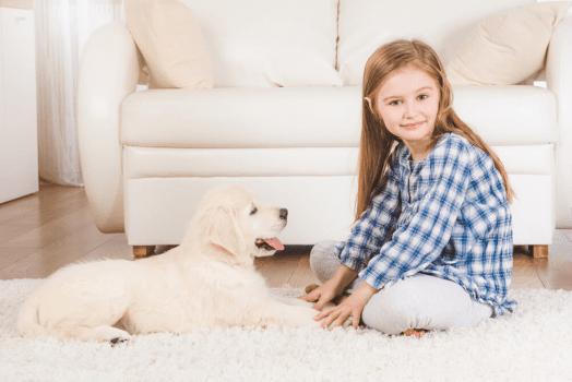 Pies w nowym domu – jak ułatwić mu pierwsze dni