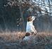Zabawy węchowe z psem – jak robić to mądrze?