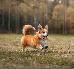 Zęby u psa – ile zębów ma pies? Budowa i układ psich zębów