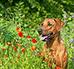 Zmiana karmy u psa - jak zrobić to dobrze?