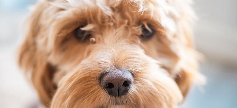 Getting a dog? Get ready!
