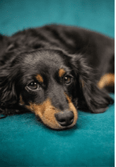 Seizures in Dogs: Types, Causes and Symptoms