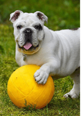 Diabetes in Dogs: Causes, Symptoms and Management