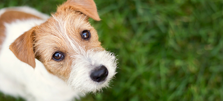 Mythbuster: 5 misconceptions  about rescue dogs