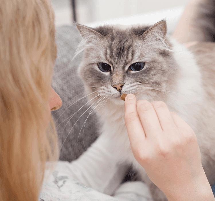 ÉDUCATION POSITIVE : TISSEZ UN LIEN ÉTROIT AVEC VOTRE ANIMAL DE COMPAGNIE