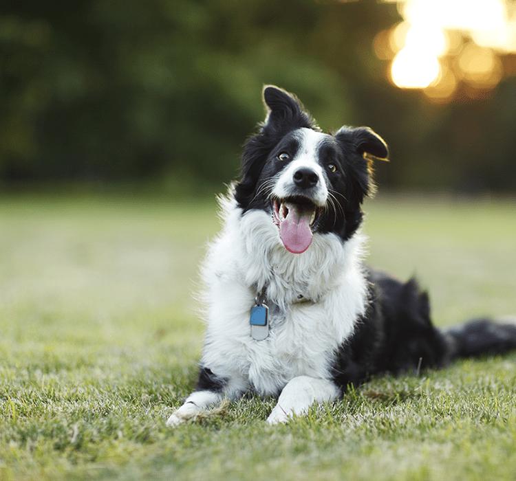 Wir räumen mit Hundemythen auf