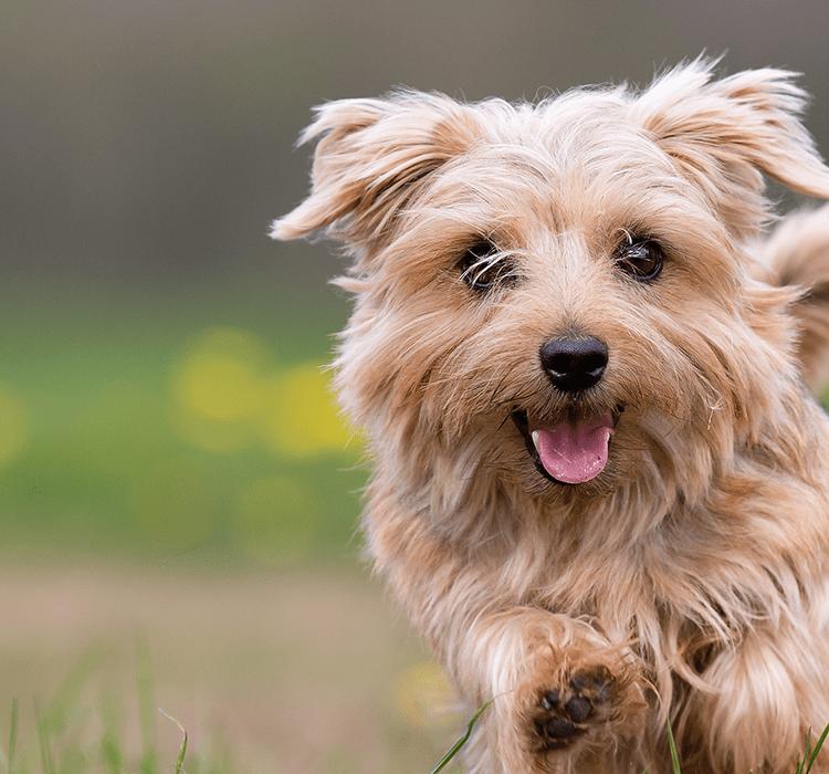 So verstehen Sie die Körpersprache Ihres Hundes