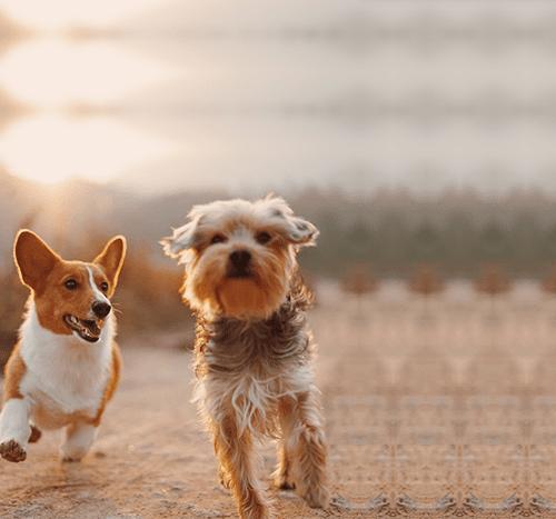 Jak odchudzić psa? Sprawdzone sposoby