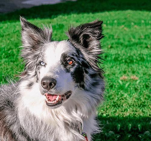 Otyłość u psa – niezbędna będzie interwencja lekarza weterynarii