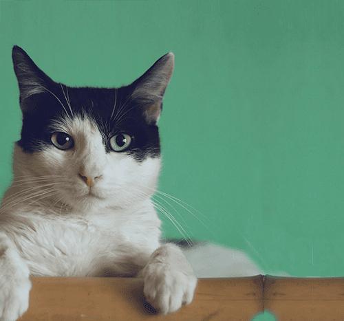 Sterylizacja kotki – jak wygląda zabieg i rekonwalescencja?