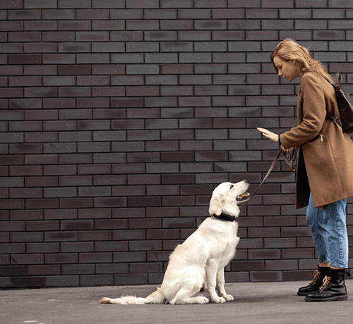 Pies ciągnie na smyczy - jak nauczyć psa chodzenia na spacery?