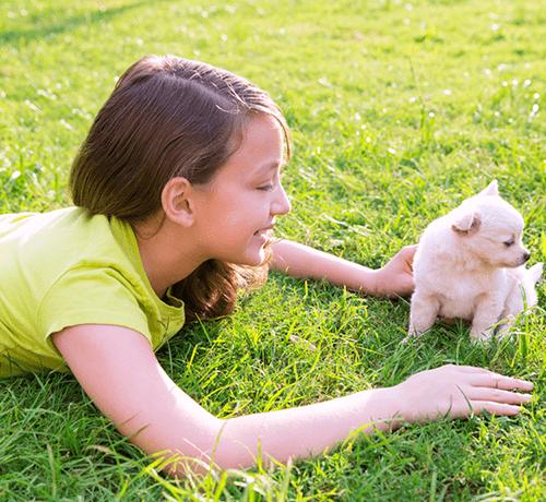 5 pomysłów na zabawę ze szczeniakiem
