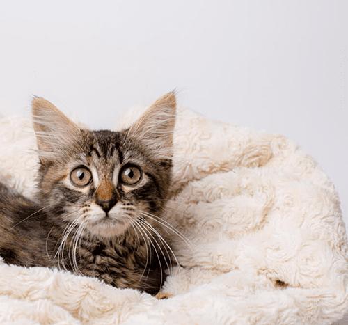 Kot wymiotuje po jedzeniu – co się dzieje i jak temu zaradzić?