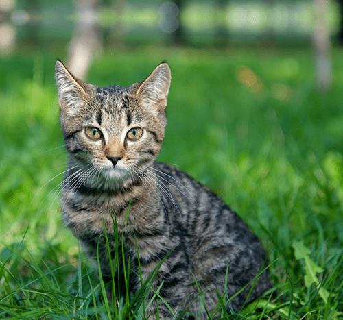 Agresywny kot – jak sobie z nim radzić?