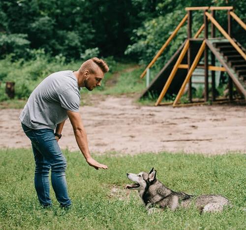 Behawiorysta psi – kim jest i kiedy należy się do niego zgłosić?