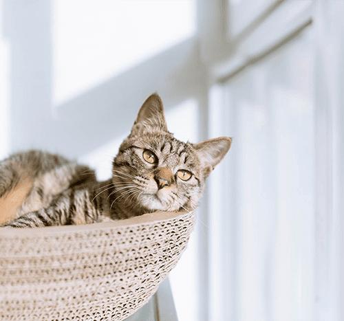 Czy kot może jeść ziemniaki? Czy ten produkt może zagościć w jego diecie?