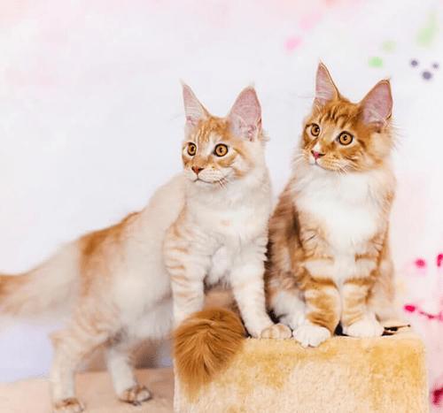 Drugi kot w domu – jak dobrze wprowadzić nowego członka rodziny?