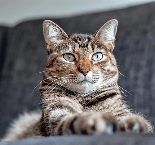 Jajko dla kota – czy możesz mu je podać?