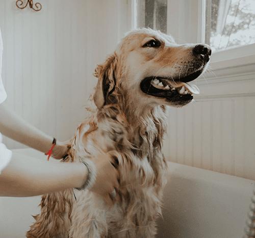 Jak często myć psa?