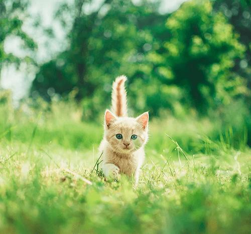 Jak długo rośnie kot?